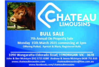 Chateau Limousins - Bull Sale